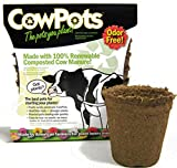 CowPots TV208926 3' Round Cow Pot Planter (12 Pack), 175mL