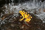 David Attenborough: Kaltblütig – Die Welt der Drachen, Echsen und Amphibien [2 DVDs] - 4