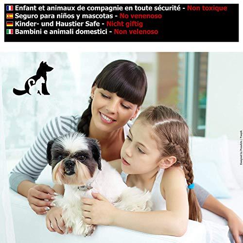 Ultimative Flohfalle für Wohnung (2 Stk) - + 12 Klebende Scheiben - Die Elektronische Falle 15 W bei   – Flohmittel für Wohnung Verhindert, dass Ihre Haustiere und Familie Gebissen Werden - 3