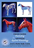 Craniosacral Unwinding and Advanced Applied Kinesiology