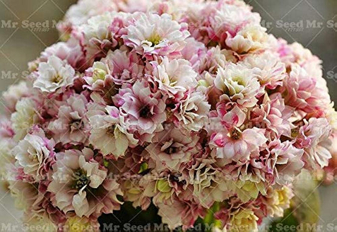 薄いです習熟度インポート1:100種子/バッグ長寿の花の種鉢植えの植物。新しい植物Diyの家の庭の盆栽の屋内および屋外は容易に育てることができます