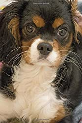Cavalier King Charles Spaniel Puppy Lined Journal (英語) ペーパーバック[Cool Image/Amazon]