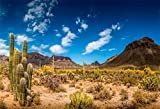 LFEEY 10x8ft Desert Cactus Backdrop for Photography Western Blue Sky Muntains Green Large Prickly Cholla Photo Background Men Boy Photo Studio Props