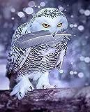 Lechuza lechuza mordiendo sus plumas en la nieve. HD Impreso pintura sobre lienzo decoración de la habitación imprimir póster cuadro lienzo Sin marco