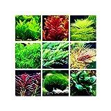 Blue Vesse Aquarium Wasser Gras Samen FischBehälter Dekor Mix Samen