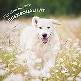 AniForte pflanzliches Neemöl Shampoo 400 ml Hundeshampoo parfümfrei – Naturprodukt für Hunde - 6