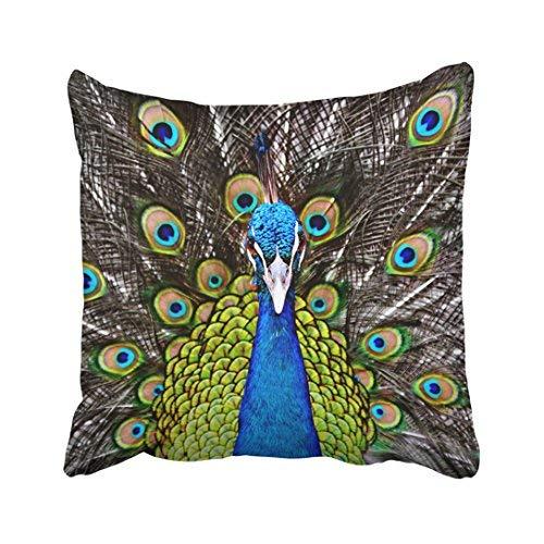 Funda de almohada decorativa para el hogar, 18 x 18 cm, diseño de pavo real en el zoológico de Tailandia, color marrón, exótico, con plumas de color india, 45 x 45 cm, fundas de almohada cuadradas decorativas para sofá, accesorio para el hogar