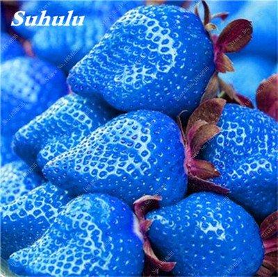 Big Promotion! 1000 Pcs Four Seasons en pot Graines Strawberry Super Sweet Seeds fruits Bonsai plantes Semences pour la maison et le jardin 14