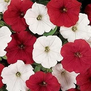 Best petunia seeds canada Reviews