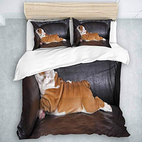 Duvet Cover Set, Puppy Resting On A Sofa Funny Animal Photography Cute Canine, Natural Look Bedding Set 3 Pieces
