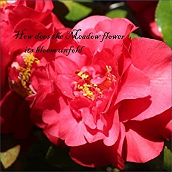 How Does the Meadow Flower Its Bloom Unfold (A collection of New Age, Ambient, Easy Listening and Classical for Meditation and Relaxation)