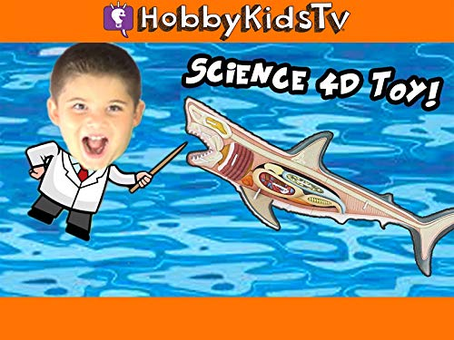 HobbyScience Lab: What's Inside a Great White Shark?