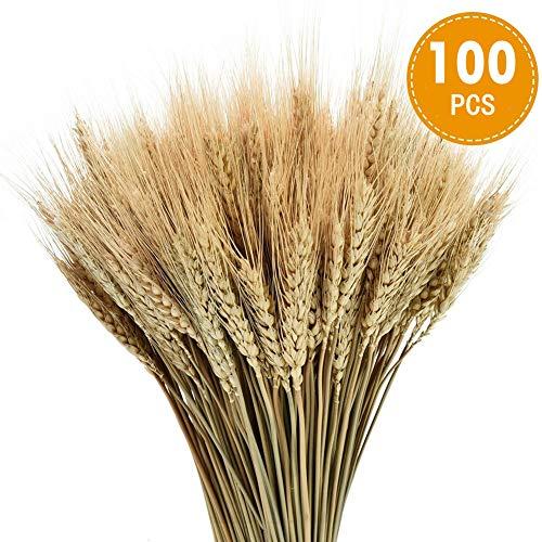 PTVwire - Juego de 100 Tallos de Trigo seco Natural para decoración de Boda, hogar, Oficina, Cocina (15,7 Pulgadas)