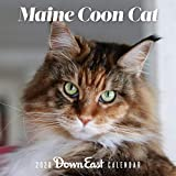 2020 MAINE COON CAT WALL CAL
