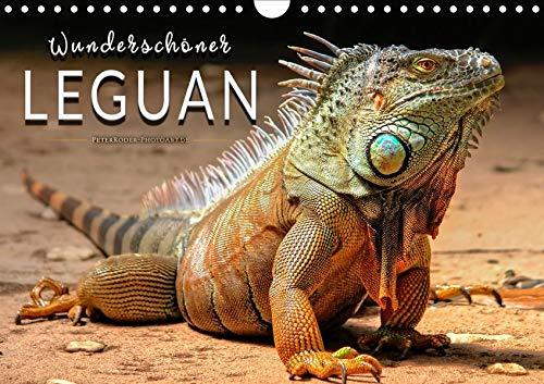Wunderschöner Leguan (Wandkalender 2020 DIN A4 quer): Eindrucksvolle Bilder der imposanten Schuppenkriechtiere. (Monatskalender, 14 Seiten ) (CALVENDO Tiere)