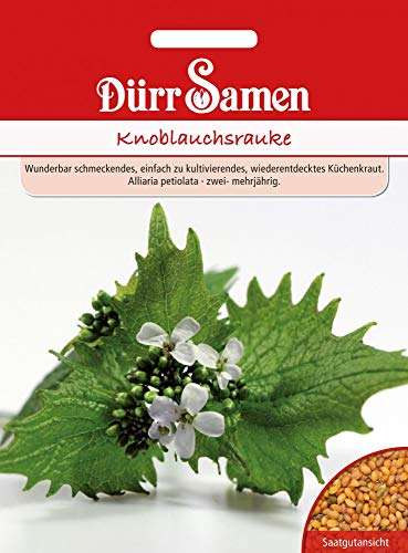 Dürr Samen 1836 Knoblauchrauke (Knoblauchraukensamen)
