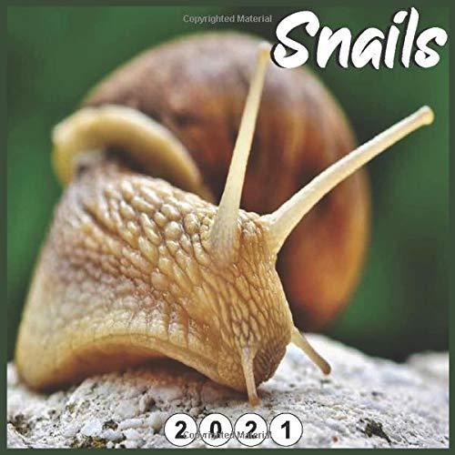 Snails: 2021 wall & Office Calendar 16 Monthe Sep.2020 to Dec.2021