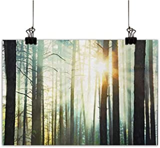 Gabriesl Nature Wall Paintings Mist in The Enchanted Forest with Sunbeams Painting Effect Digital Art ImageLiving Room Decorative Paintingseafoam Dark Brown W24 x H16