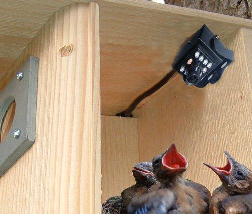 Birdhouse Spy Cam BCAMHEHD Hawk Eye HD Camera