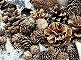 Unbekannt Zapfen Natur Sterne Weihnachten Deko Braun Holz Winter Tischdeko Basteln - 2