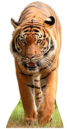 Star Cutouts Pappaufsteller von Tiger