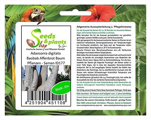 Stk - 10x Adansonia digitata Baobab Affenbrot Baum Pflanzen - Samen ID177 - Seeds Plants Shop Samenbank Pfullingen Patrik Ipsa
