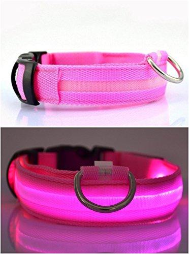 NEO+ Sie die Hunde Sichtbarkeit und Sicherheit USB Wiederaufladbare LED Hund Sicherheit Kragen - Ultra Helle LED - Verbunden mit Geräten - Keine Batterien - Hund Wird mehr sichtbar & sicher