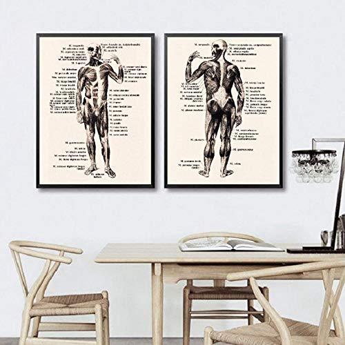 TeriliziMenschlicher Körper Vorder- Und Rückseite Zwei Vintage Poster Und Drucke Medizin Anatomie Illustration Kunst Leinwand Gemälde Arzt Büro Dekor-50X70Cmx2 Kein Rahmen