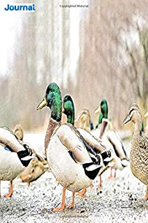 """Journal: team of duck in the forest: 6"""" x 9"""", 103 pages, For everyone: man, woman, children, teenagers and entrepreneurs"""