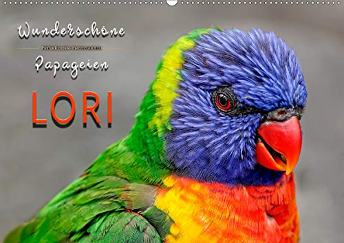 Wunderschöne Papageien - Lori (Wandkalender 2021 DIN A2 quer)