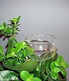 4 Stück Durstkugeln Bewässerungskugeln Durstkugel Pflanzensitter GBG...