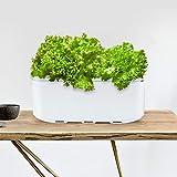 CRZJ Sistema de Cultivo hidropónico de Interior Inteligente, sembradora de riego automático Jardín Interior, Recordatorio Inteligente más Sistema de Cultivo hidropónico,1 Pack