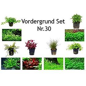 Vordergrund Set mit 6 Topf Pflanzen Aquariumpflanzenset Nr.30
