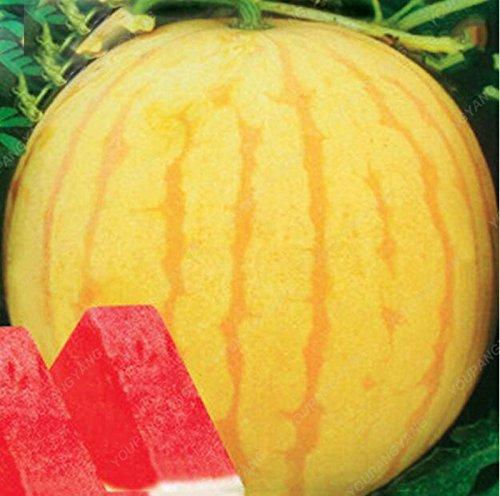30Seeds Heirloom jaune peau rouge pastèque sans pépins Graines Service Pack 13% de sucre doux graines juteux bonsaï fruits