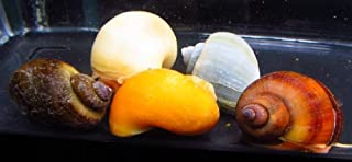 Best colorful freshwater snails Reviews
