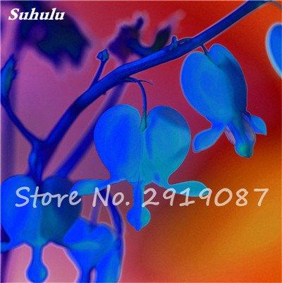 200 pièces de Bell Orchid Seeds Rare Muguet Fleurs d'intérieur Fleurs riches Aroma Bonsai graines de plantes vivaces Fleurs Jardin 17