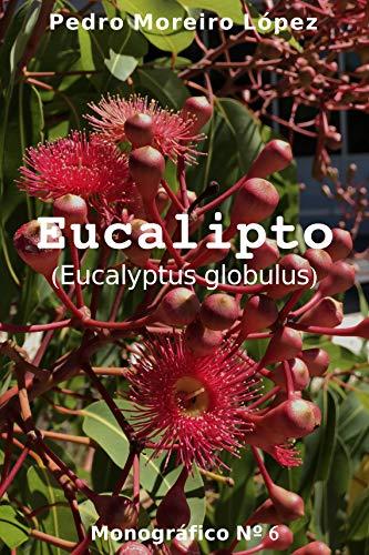 Planta De Eucalipto  marca