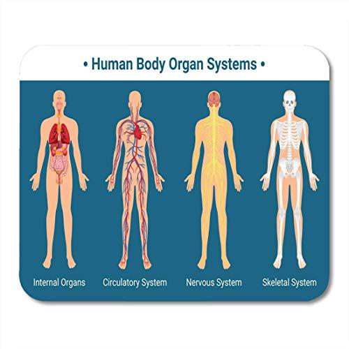 Almohadillas para mouse Cuerpo humano Órganos internos Sist