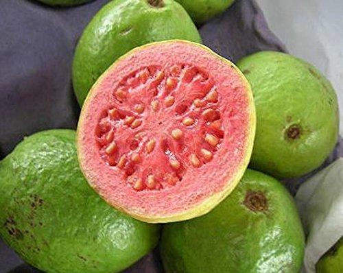 Guayaba frutas tropicales Psidium guajava semillas de árboles de guayaba exótica comestible 15 SEMILLAS