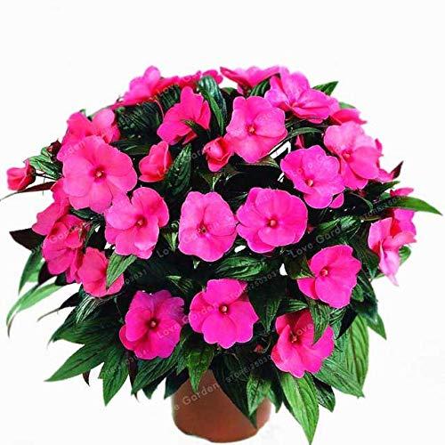 100pcs / Lot, Bunte Impatiens Vier Jahreszeiten seedsplants Gartenblume Pflanzen blühen Bonsais Topfpflanzen Bonsais Henna: 1