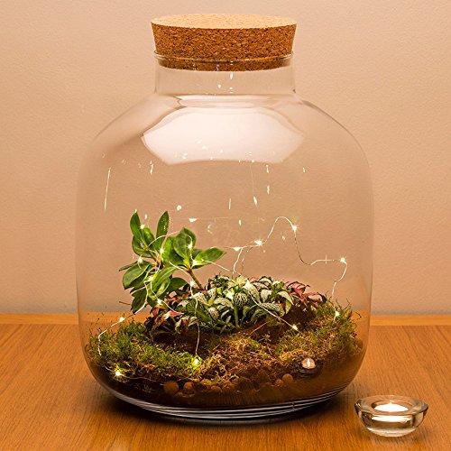 De stedelijke botanicus grote kurk verzegeld ecosysteem conische terrarium met planten, 30 cm hoog 24 cm diameter