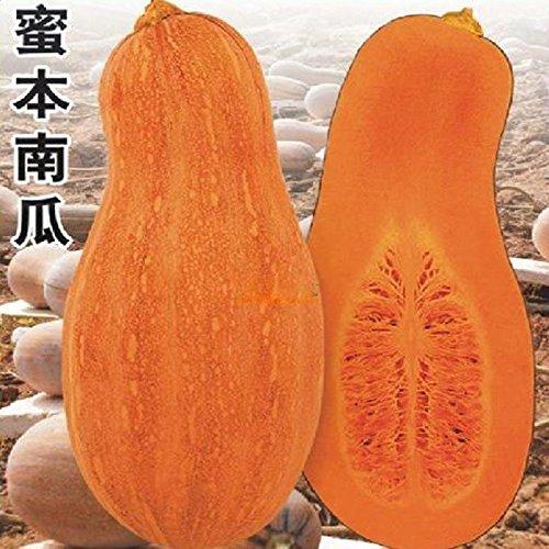 20 pcs/sac Sweet Graines de citrouille Vegetable Seeds perdre du poids pour DIY Home Garden 49%