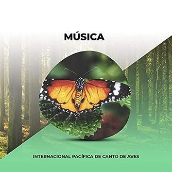 Música Internacional Pacífica de Canto de Aves