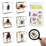 ELifeBox 6 PCS Insect Specimen Set, Spider/Scorpion/Huechys Sanguinea/Flower Chafers/Cicada/Spotted Lanternfly...