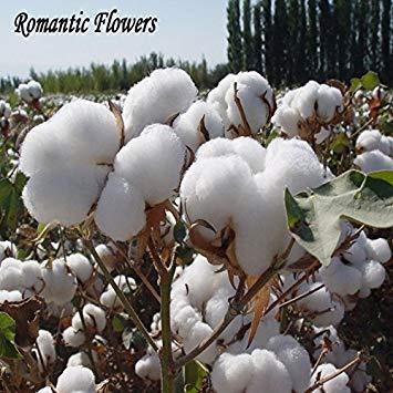 DIY jardin WHITE usine COTON Gossypium Seeds Livraison gratuite 30 particules / Sac