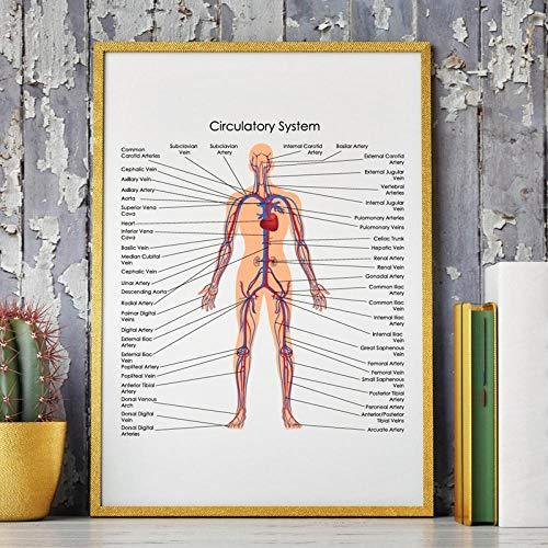 Honony Diagrama del Diagrama del Sistema circulatorio del Cu