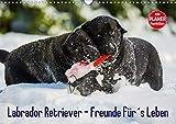 Labrador Retriever - Freunde für´s Leben (Wandkalender 2020 DIN A3 quer)