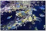 LFNSTXT Museo de Mónaco Acuario Monte Carlo Rompecabezas para adultos y niños, 500 piezas, juego de rompecabezas de madera para regalos, decoración del hogar, recuerdos especiales de viaje