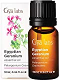Gya Labs Egyptian Geranium Essential Oil - Mood Calmer for Flawless & Ageless Skin (10ml) - 100% Pure Natural Therapeutic Grade Geranium Oil Essential Oils for Aromatherapy Diffuser & Topical Use