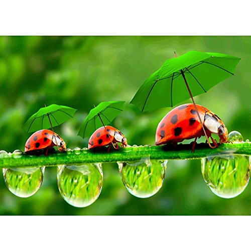 DIY 5D Diamond Painting by Number Kits, Crystal Rhinestone Diamond Embroidery Paintings Pictures Arts Craft for Home Wall Decor, Ladybug
